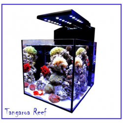 Cubicus Nano Reef