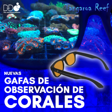 Coral Viewing Glasses